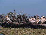 Parc du Djoudj Sénégal